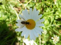 Bee_by_supergege94.jpg
