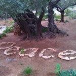 IMG_20151117_084000 orto olivi