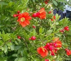 f. rossi