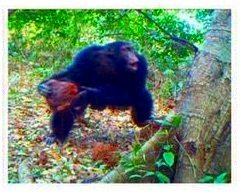scimpanze,alberi,sassi,religione