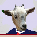 8 capra