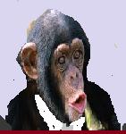 9 scimmia