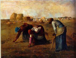 spigolatrici di millet
